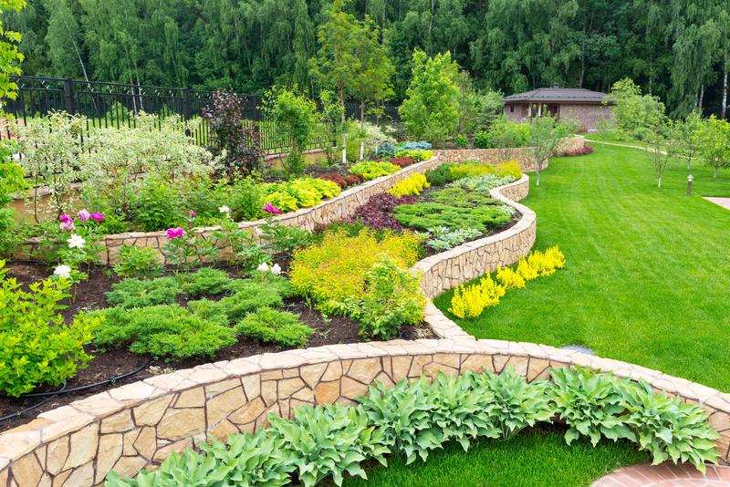 Healthy green plants